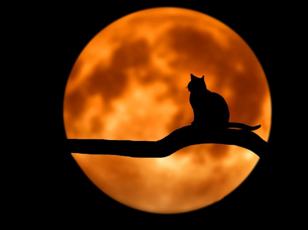 canva_-_photography_of_cat_at_full_moon